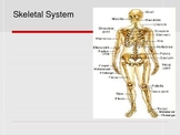 Body Systems: Skeletal Powerpoint