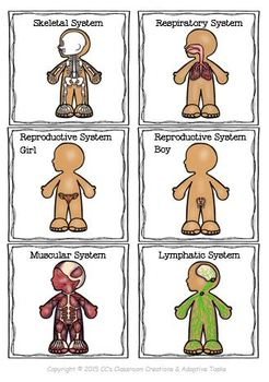 Body Systems, Skeleton and Body Organs Bundle