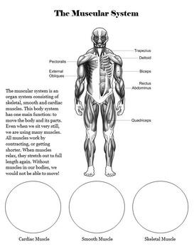 Body Systems Student Workbook