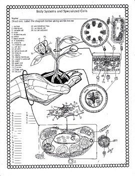 Body Systems and Specialized Cells