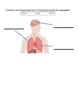 Body Systems and Staying Healthy