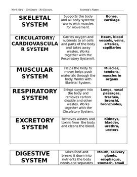 Body Systems illness Matching