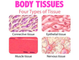 Body Tissues - Connective, Epithelial, Muscle and Nervous