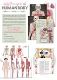 Body Tracings & Human Body