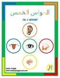 Body Unit - The 5 Senses
