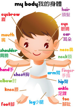 Body Vocabulary in English and Chinese