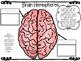 Body and Behavior Diagrams Interactive Activities