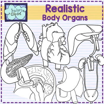 Body organs clipart {REALISTIC} -- Line art included--[Science clip art]