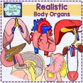 Body organs clipart {REALISTIC} -- Line art included--[Sci