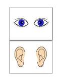 Body part Flashcards