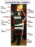 Body parts/Partes del Cuerpo en Español