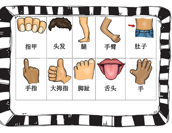 Mandarin Chinese Body parts flashcards card game size (Chinese version)