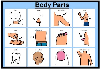 Body parts matching boards