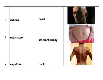 Body parts vocabulary w/pictures in Spanish and English