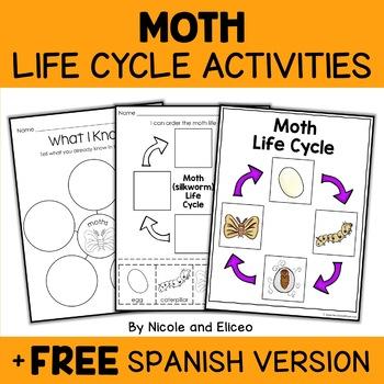 Bombyx Mori Moth Silkworm Life Cycle Activity