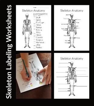 Bone Anatomy: Skeleton Labeling Worksheets by Hatching ...