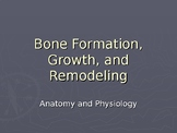 Bone Anatomy, Formation, Growth and Remodeling
