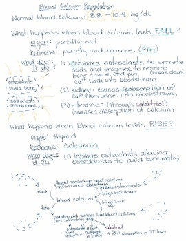 Bone Histology and Blood Calcium Regulation Notes