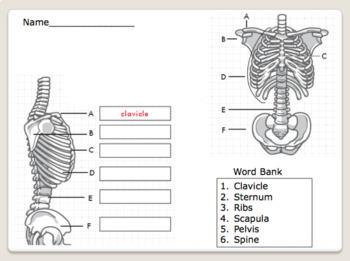 Bone Lesson