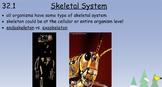 Bone Muscle Integument