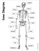 Bone Scans - Skeletal System Fun (w/ QR Codes!)