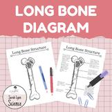 Bone Structure Diagram