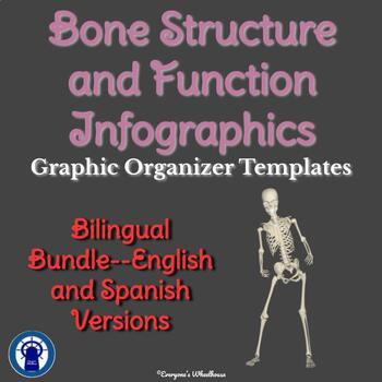 Bone Structure Infographic Graphic Organizer Bilingual Bundle