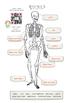 Human Body (Bones) - including FREE AUDIO recordings