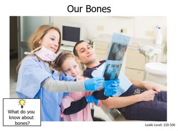 Human Body-Bones-Level B