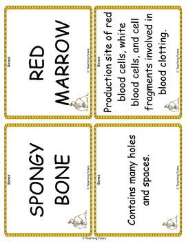 Bones Vocabulary Cards