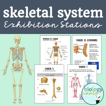 Skeletal System Exhibition Lab Stations