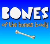 Bones! Learn the Bones of the Human Skeleton!