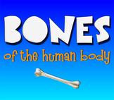 Bones! Learn the Bones of the Human Skeleton!