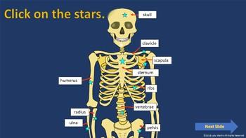 Bones - Learning the Bones of the Skeleton