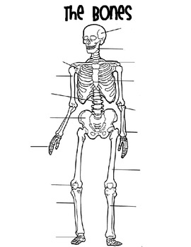 Bones Matching-Skeletal System Activity