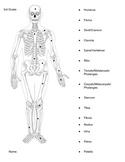 Bones Matching Test for Primary School