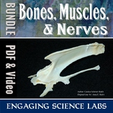 Human Body: Bones and Muscles and Nerves—lab BUNDLE Collection for Middle School