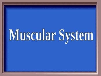 Bones, Muscles, Skin Jeopardy Game