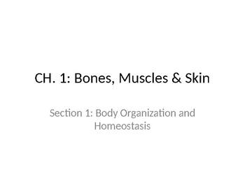 Bones, Muscles & Skin STUDENT Ppt