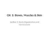 Bones, Muscles & Skin STUDENT Ppt