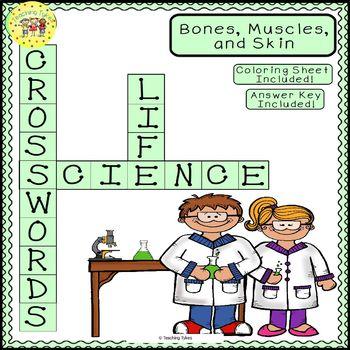 Bones Muscles Skin Science Crossword Puzzle Coloring Worksheet Middle School