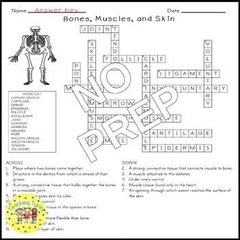 Bones Muscles Skin Crossword Puzzle