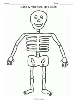 Bones Muscles Skin Crossword Puzzle