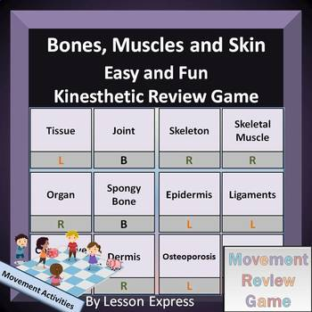 Bones, Muscles and Skin Terminology -- Kinesthetic Review Game