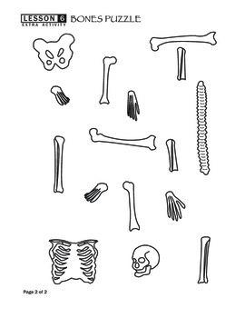 Bones Puzzle Worksheet