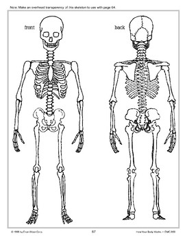 Bones Support and Help Move the Body