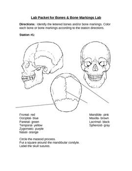 Bones and Bone Markings Lab