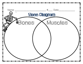 Bones and Muscles Graphic Organizers