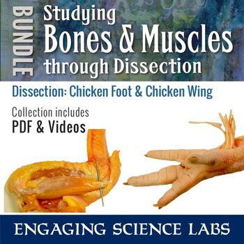Bones and Muscles and Tendons Study through Dissection: PDF and Video