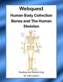 Bones and The Human Skeleton-  WebQuest:-CCSS .RI.4.1-8.1-.RI.4.2-8.2